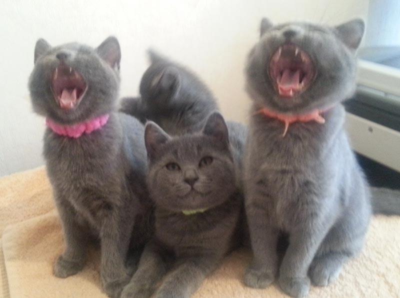La chorale des chatons !