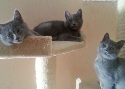 De gauche à droite : Junia, Jedi et Joséa