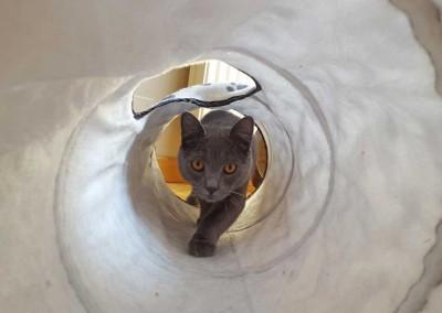 Jedi, 7 mois : la traversée du tunnel !