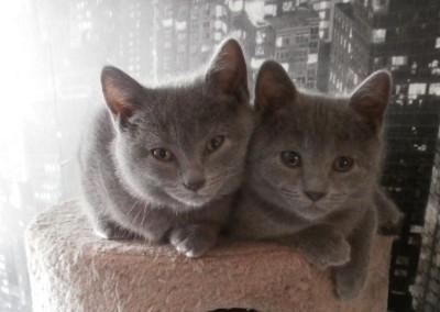 Junia, à gauche, avec sa soeur