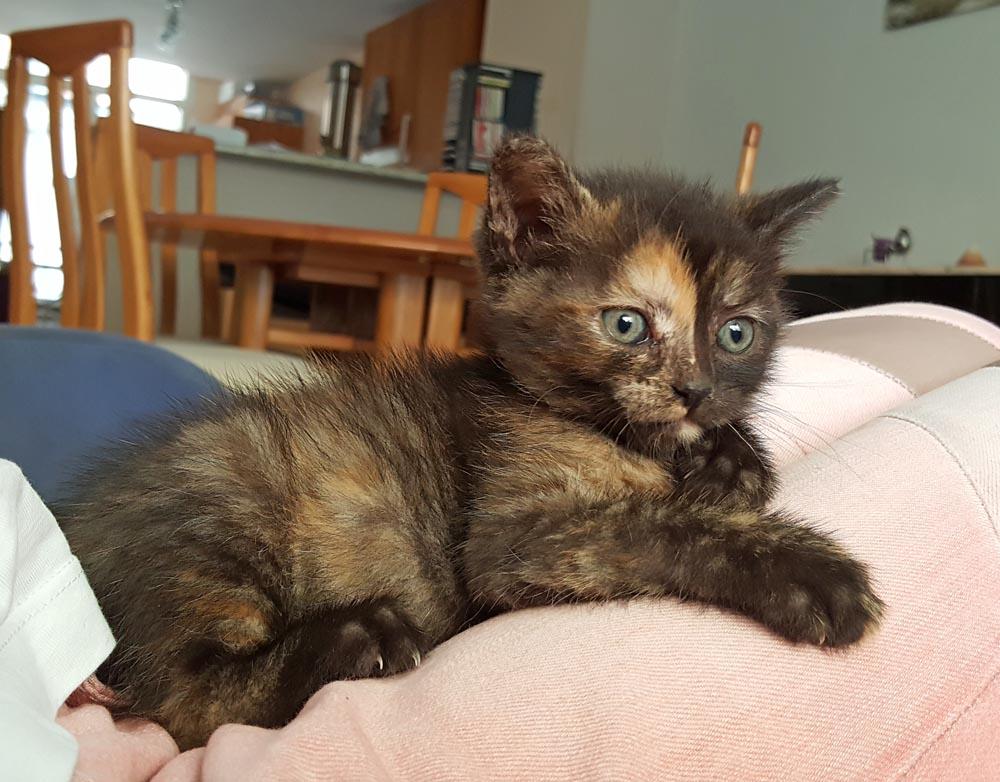 Moka, 1 mois