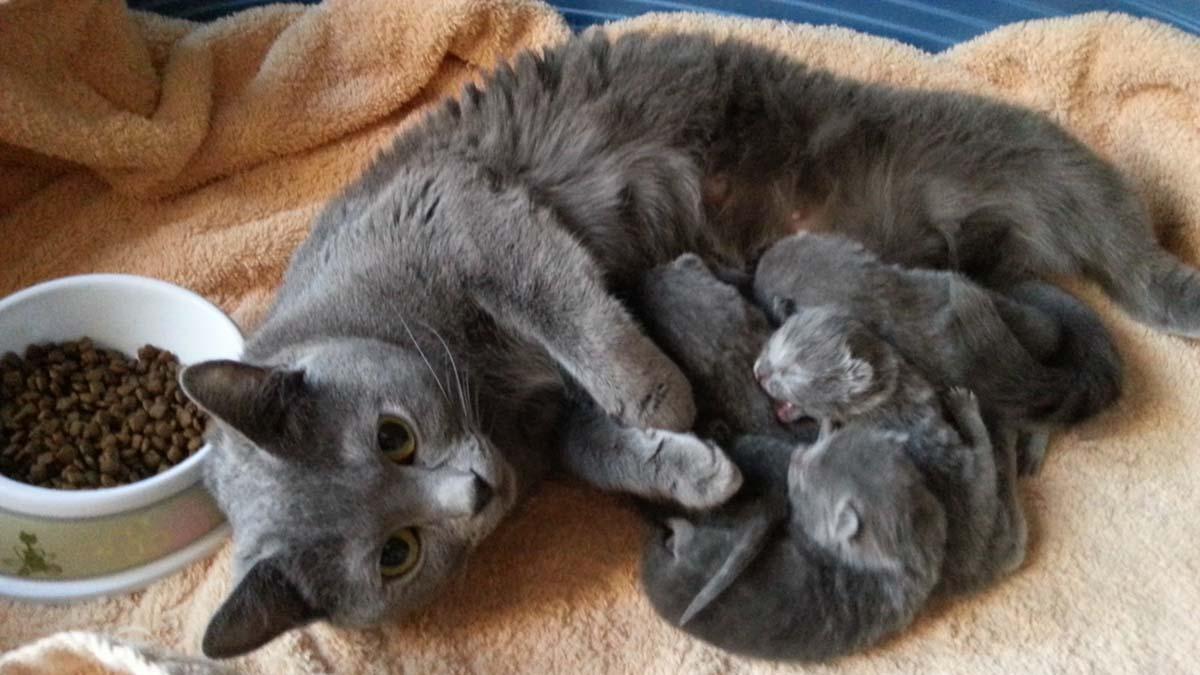 Avec maman chat