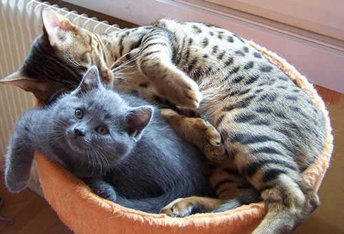 Feufollet et un chaton de 2010