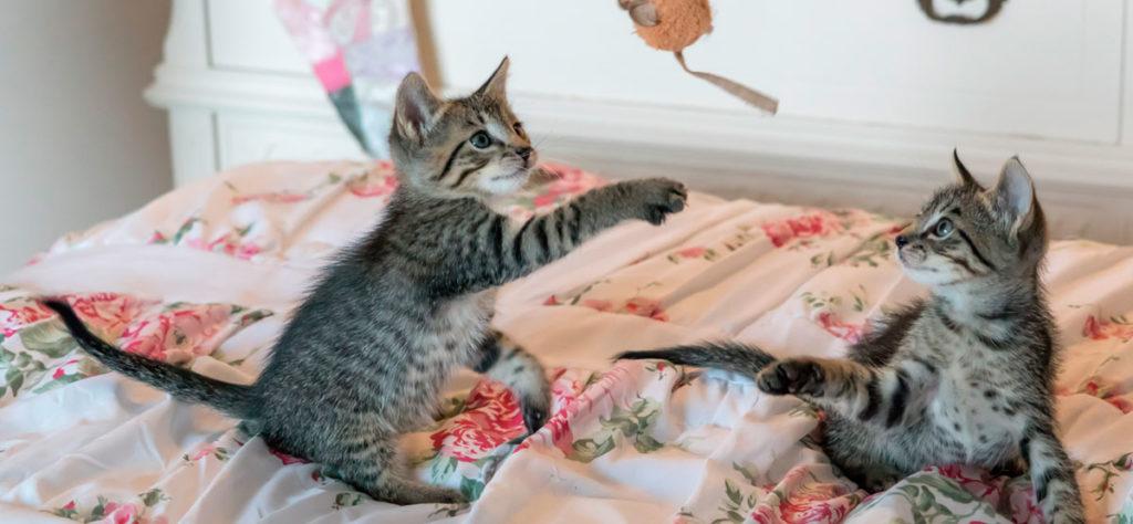 Accueillir un chaton, que faire s'il mord ?