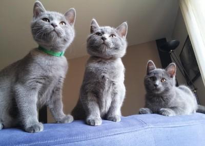 De gauche à droite : Joséa, Junia et Jedi (2 mois et demi)