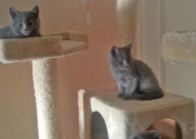 Age : 2 mois. De bas en haut : Joséa, Jedi, Junia et Isleen