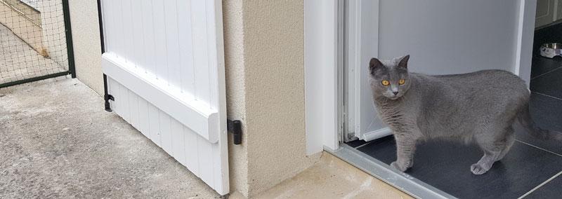 Isleen, chatte chartreuse, sur le seuil de la porte du jardin