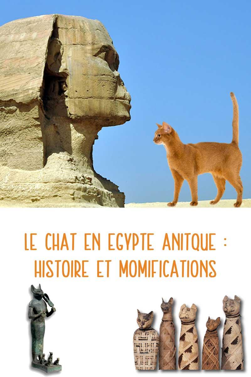 Histoire du chat en Egypte antique