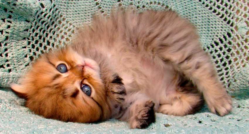 éduquer son chat : Chaton mignon aux pattes de velours