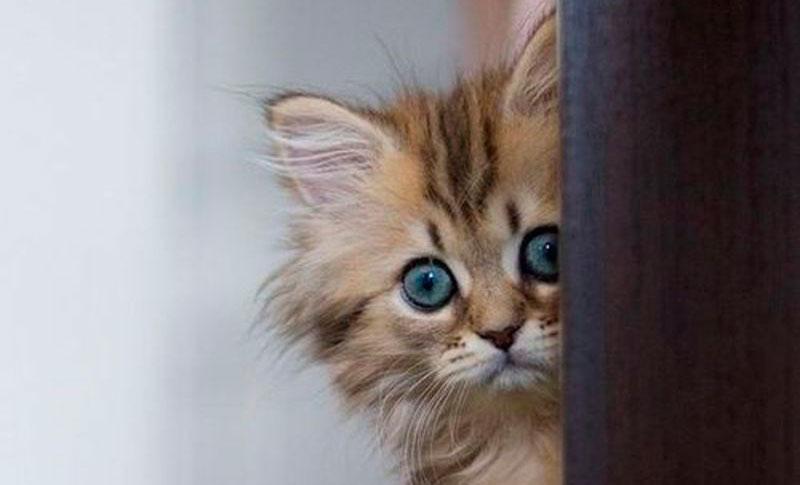 Education du chaton qui mord et griffe - blog Entre Chats