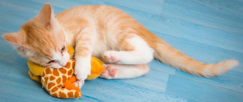 Jouets à mordre pour chats et chatons - Blog Entre Chats