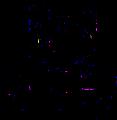 Boutique L'Ile aux chats, logo