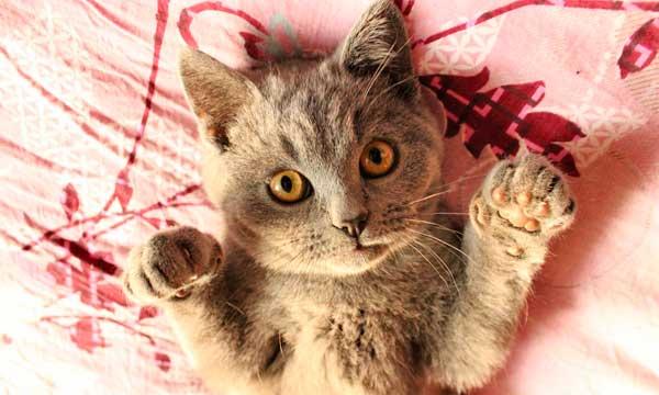 Qu'est-ce qu'un Cat Lover ?