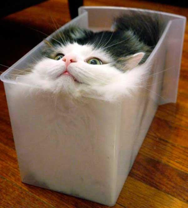 Dans une boite : le chat à l'état liquide