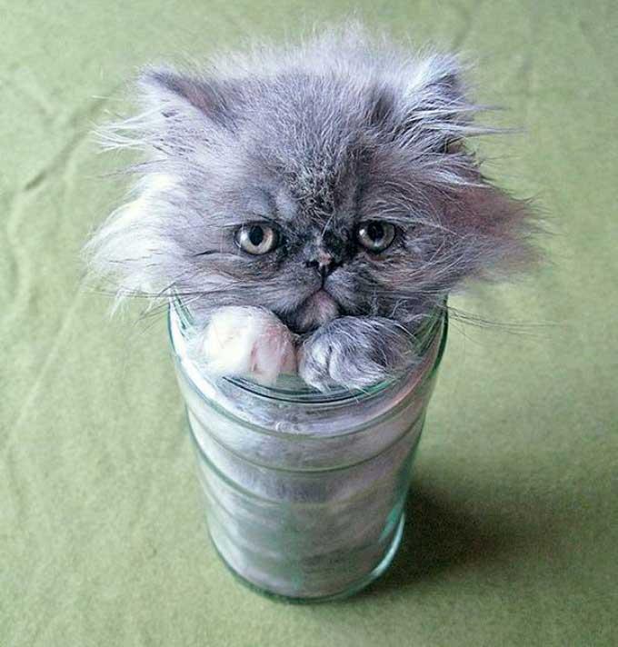 Chat dans un vase
