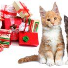 15 idées cadeaux sur le thème des chats